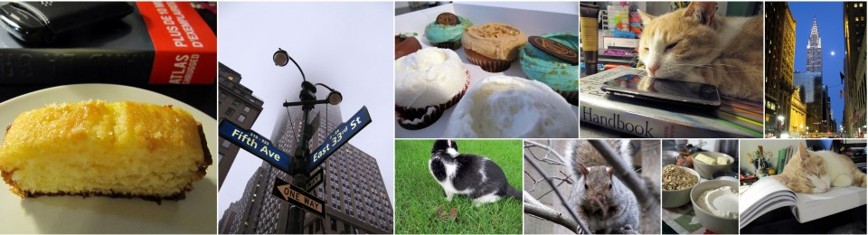 Books, cupcakes and cats chasing chipmunks…